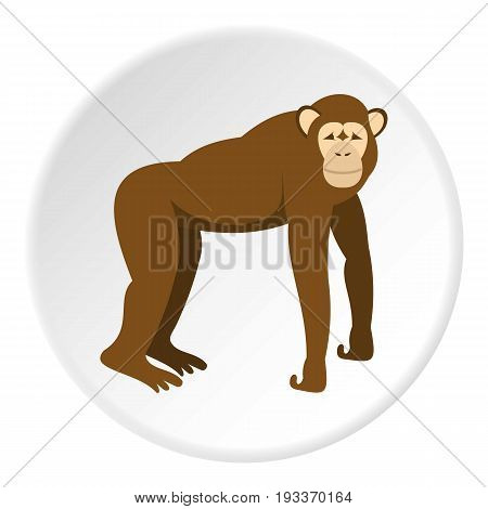 Brown monkey standing on its four legs icon in flat circle isolated on white background vector illustration for web
