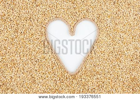 Barley grains and a rope in the shape of a heart with a place for designers. The concept of love of barley