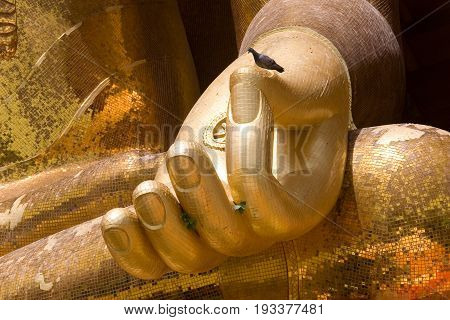 The dove sits on the arm of a large golden Buddha. Thailand.