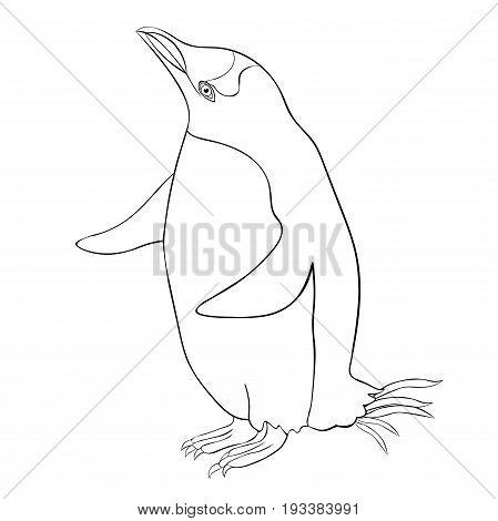 Coloring Subantarctic A Penguin Papuan Thinking. Vector Illustration