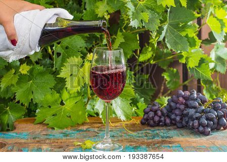 Waiter Pouring A Glass Of Red Wine, Outdoor Terrace, Wine Tasting In Sunny Day, Green Vineyard Garde