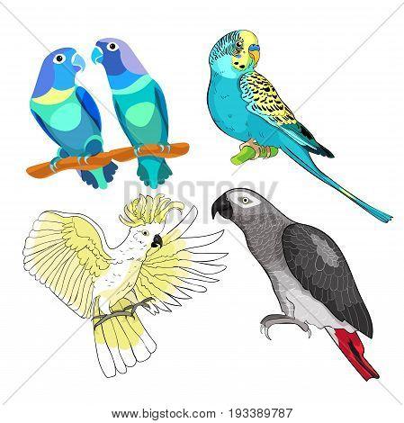 Jaco, Lovebird, Wavy Parrot Kakadu Set. Vector Illustration