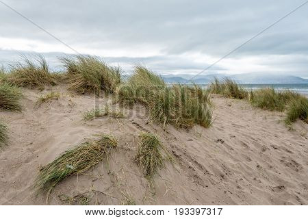 Sand Dune At Inch Beach In Ireland