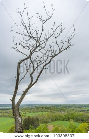Bare Tree Overlooking Green Valley With Agricultural Lands