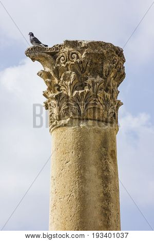 Ancient Roman city of Gerasa modern Jerash, Jordan pigeon on top of column