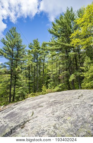 Tall Pine Forest And Sloping Bedrock And Rocks In Northern Wilderness