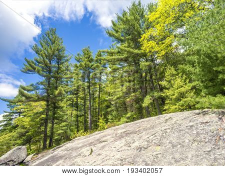 Sloping Canadian Shield Bedrock And Rocks With Dense Lush Pine Forest Standing Tall Above