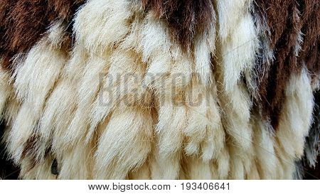 fur texture image or fur texture background