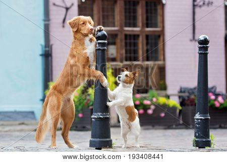 two adorable dogs posing together in the city