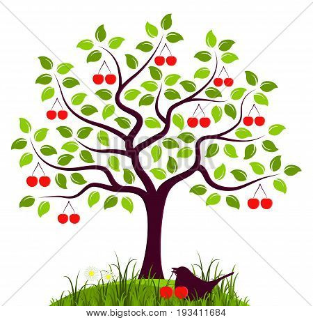 vector cherry tree and bird with cherry in grass isolated on white background