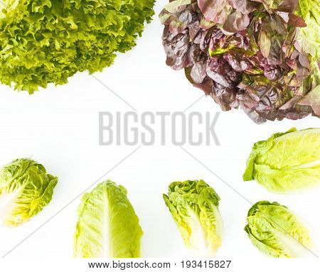 Arrangement of oakleaf green leaf little gem and romaine lettuce on white background with copy space.