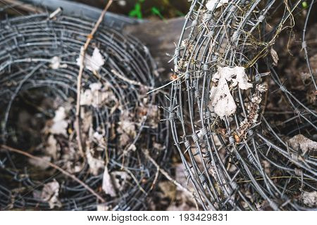 old Coil of barbed wire. backround close up