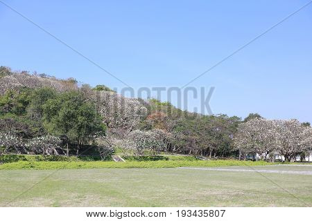Green lawn in a public park concept of garden decoration and relaxation.