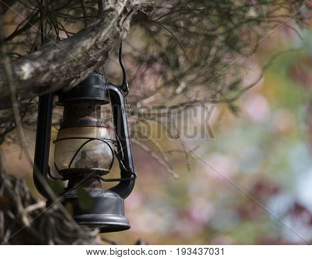 An old lantern hanging from a tree in a spring garden