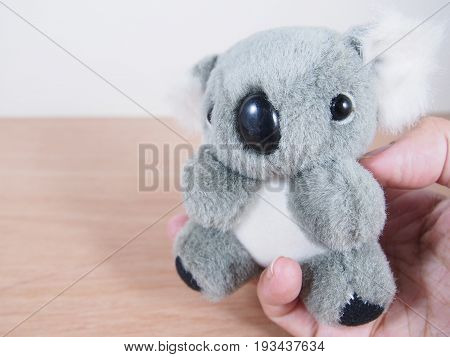 Gray lovely Koala bear doll in palm on wood floor