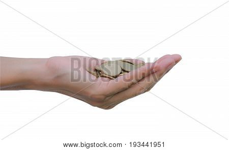 Handful of coins in palm hands. Hands with coins isolated on white background with clipping path.