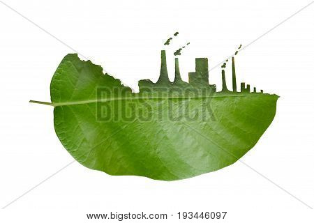 Tree leaf cleft, the impact of industrial pollution.