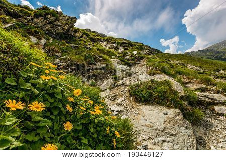 Beautiful Flowers On Steep Slope Of Rocky Hillside