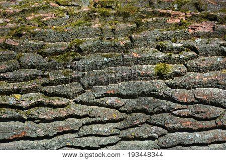 Mossy bark tree textured background. Old tree bark background.
