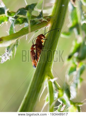 Two Small Red Bugs On A Plant Stem