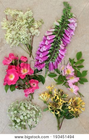 Summer wildflower selection with meadowsweet, red and pink wild roses, honeysuckle, foxglove and cow parsley over hemp paper background.