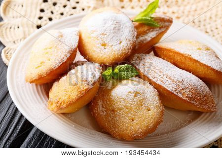 French Cookies Madeleine With Mint Closeup On A Plate. Horizontal, Classical Style
