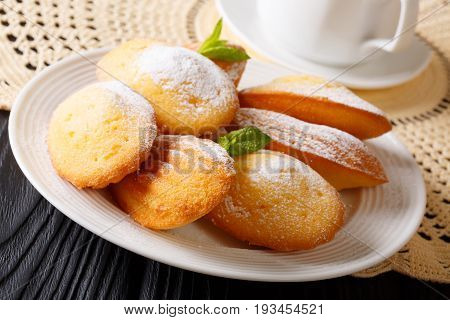 Elegant Breakfast: Madeleine Cookies With Mint And Tea Close-up. Horizontal