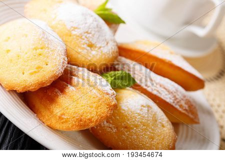 Golden Classic Madeleine Cookies With Sugar Powder And Coffee Macro On A Plate. Horizontal