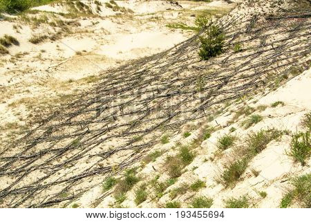 Dune Protecting Wooden Construction Over The Sand At Natural Park Of Curonian Spit, Kaliningrad Regi