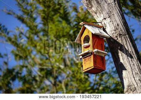 colorful wooden bird house hanging on a tree with text area