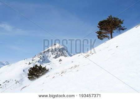 Tree on a mountain in the mountains of Dombai Caucasus