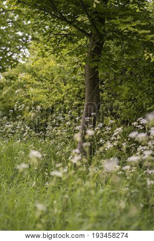 Beautiful Vibrant Shallow Depth Of Field Landscape Image Of English Countryside