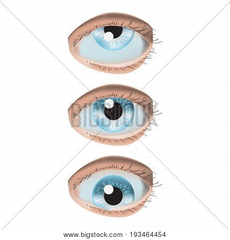 Vector illustration isolated with photo realistic three eyes on white background. Up, down and center sight