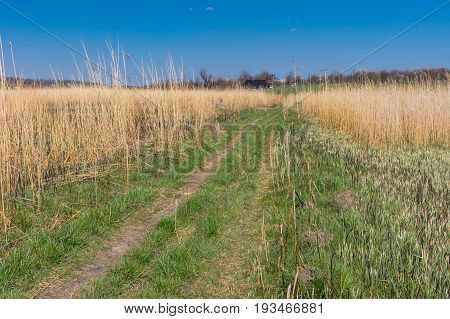 Spring landscape with an earth road to remote village through the rushy water meadow in central Ukraine