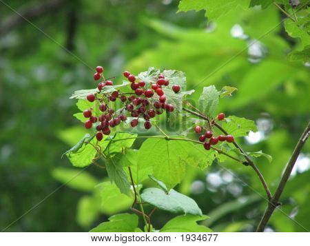 Berry Cluster