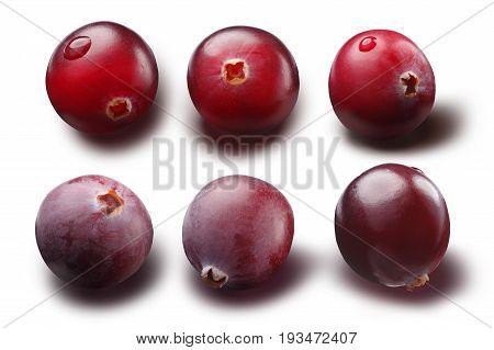 Single Cranberries, Paths