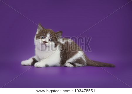 Little cute funny kitten on studio purple background