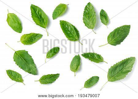 Holy Basil Leaf Isolated On White Background