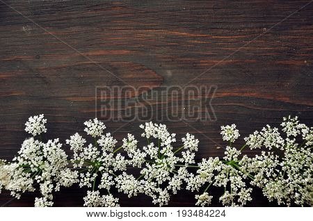 Dark brown wooden table with white flowers of goutweed. Top view and empty space.