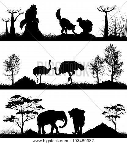 Vector set of wild animals. Ring-tailed lemur, elephant, ostrich in different habitats, wildlife concept