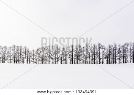 Biei, Hokkaido, Japan countryside in winter.