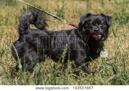 Emotional Old Black Dog Posing Outdoors, Cute Fluffy Pup On A Walk In The Park, Dog Babysitter Conce
