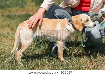 Female Owner Petting Cute Dog, Woman Caressing Friendly Happy Brown Dog Outdoors