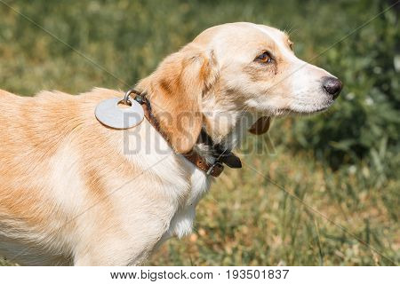 Cute Friendly Brown Dog Looking At Owner, Sad Trusting Eyes Of A Dog In A Park Close-up, Animal Adop