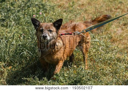 Cute Mixed Bred Small Dog Posing In The Park, Mongrel Puppy On A Walk, Animal Adoption Concept