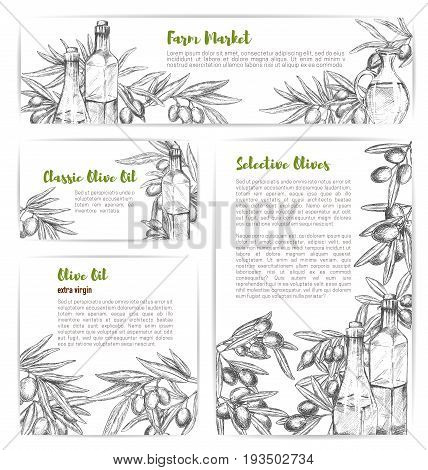 Olive oil sketch banners and posters set of green and black olives branches for olive oil market. Vector templates design of extra virgin natural organic cooking oil product in bottles or jars
