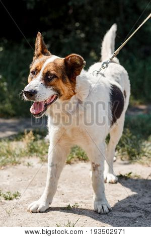 Cute White Puppy Smiling In A Sunny Park While On A Walk, Happy Emotional Dog Posing Outdoors, Anima