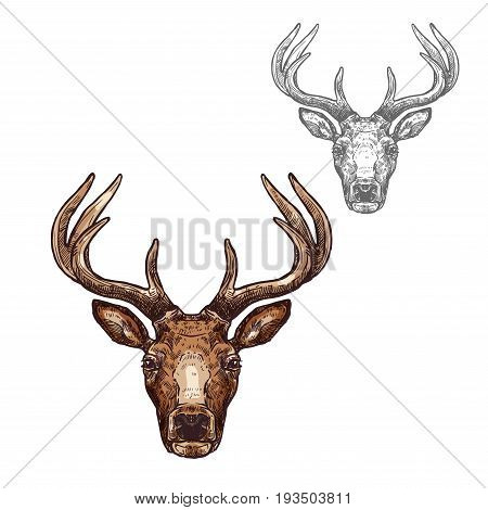 Deer head sketch vector icon. Wild forest stag deer or reindeer with antlers. Isolated wildlife fauna and zoology symbol or emblem for blazon for hunting sport team trophy, nature adventure club