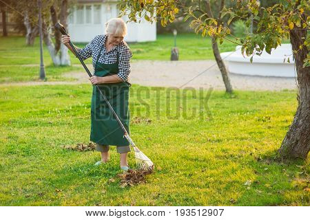 Senior lady working with rake. Old woman in apron outdoors. Spring garden clean up tips.