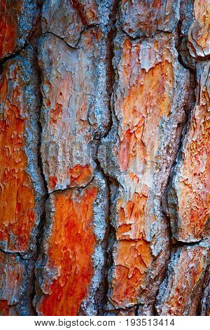 Bark Tree Pine Cedar abstract Texture background